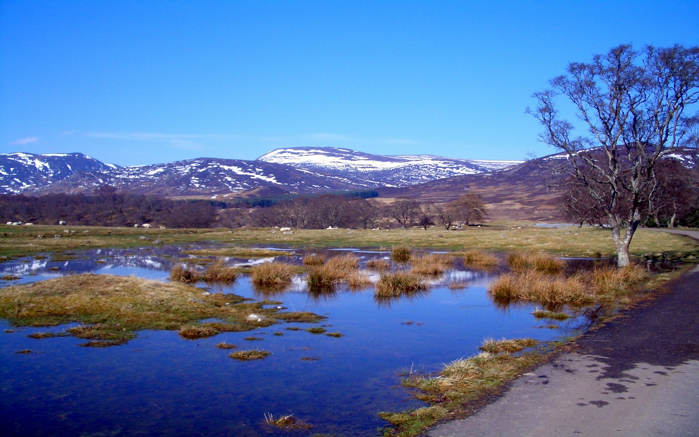 View from Newtonmore Glen